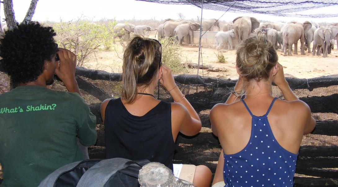 High school volunteers doing elephants surveys.